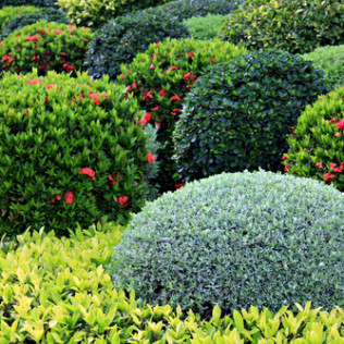 Shrubs are 20% off from September 3rd-14th